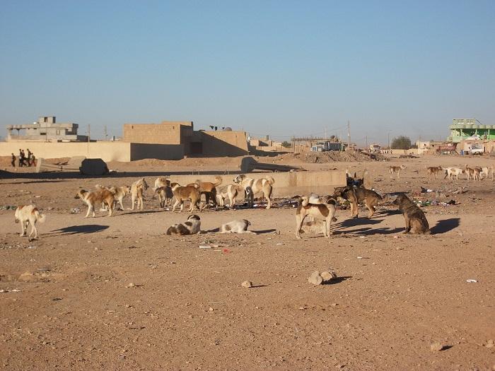 خطر الكلاب السائبة يأتي بعد القاعدة في ديالى