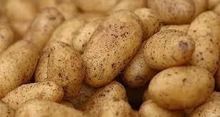 البطاطا لا تسبب السمنة !!!