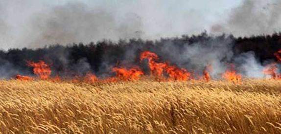 إحتراق 140 دونما من محصول الحنطة في قضاء القائم في المناطق المحاذية للأراضي السورية ..