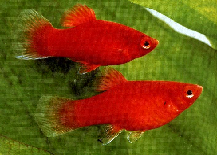 الموارد المائية تعلن تشديد الاجراءات المتخذة لإزالة بحيرات الاسماك المنشأة تجاوزاً