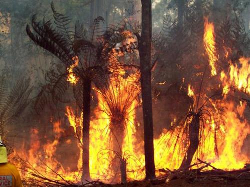 مصرع 19عامل اطفاء بحريق في أريزونا الأمريكية