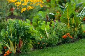 النباتات بإمكانها الحديث والتواصل !!!