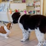 FRANCE-ANIMALS-HEALTH-VETERINARY