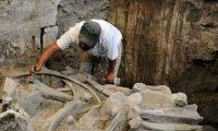 """العثور على بقايا """"ماموث"""" تبلغ من العمر 14 ألف عام"""