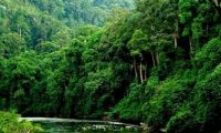89.5 مترا الرقم القياسى لارتفاع شجرة في جزيرة «بورنيو» الماليزية