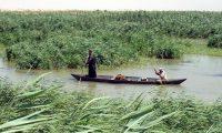 لجنة التراث العالمي تناقش ترشيح اهوار جنوب العراق في قائمتها
