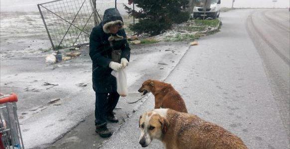 رفق الأتراك بالحيوان