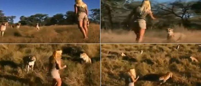 """""""ناشيونال جيوجرافيك"""" تشتري فيديو لفتاة تحاصرها النمور بمليون دولار"""