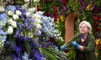 اليوم..افتتاح معرض تشيلسي للزهور في لندن