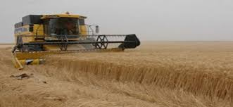 واسط تنفي شراء مادة الحنطة من ايران