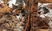 إنقاذ 500 قطة بالصين قبل أن تتحول لوجبات