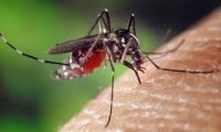 علماء:الاعتماد على البعوض في كشف المجرمين