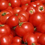 من فوائد الطماطم