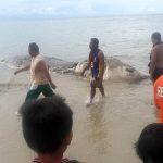 عملاق بحري غامض يثير الرعب في جزيرة فلبينية