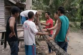 """معركة """"حياة أو موت"""" بين إندونيسي وثعبان عملاق!"""