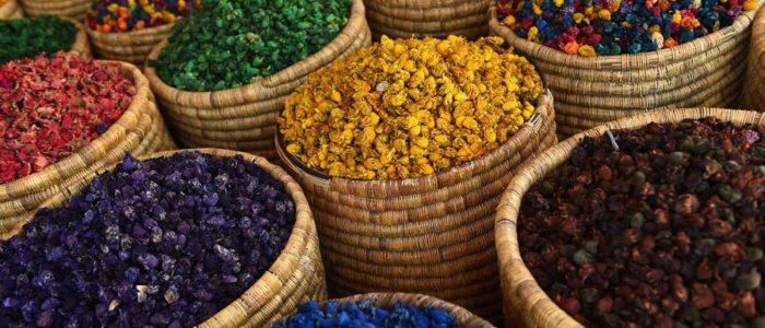 نبتة مغربية تثير الاهتمام
