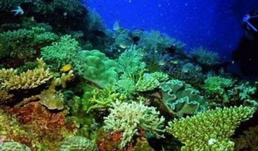 اكتشاف 30 نوعاً جديداً من المخلوقات البحرية