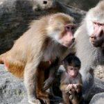 إجلاء الزوار من حديقة الحيوان في باريس