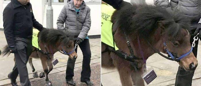 بسبب التخوف من الكلاب..حصان قزم.. دليل للمكفوفين