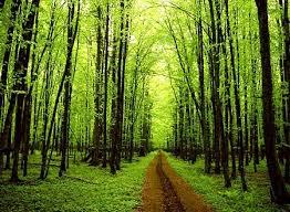 أكثر المدن امتلاكا للأشجار