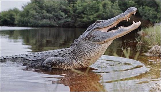 سياحة انتحارية مع تمساح النيل