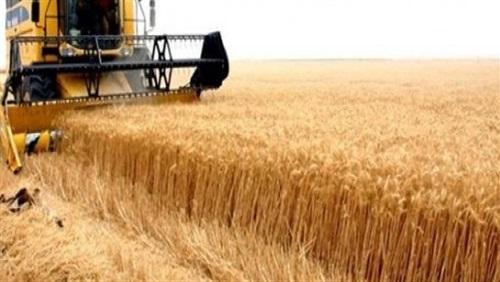 الحبوب:العراق اشترى 1.75 مليون طن قمحا محليا