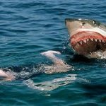 هجوم أسماك القرش في فلوريدا