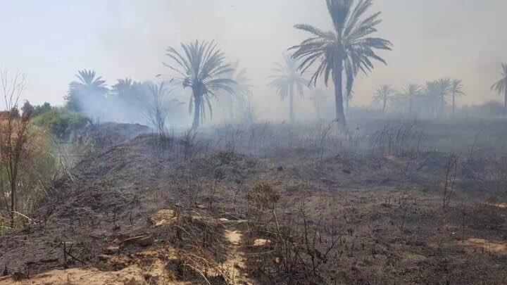 عملاء إيران يحرقون بساتين ديالى