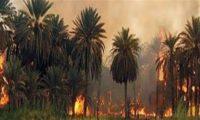 مصدر أمني:إحراق بساتين ديالى مستمر من قبل المليشيات الإيرانية