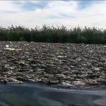 طلسم نفوق الأسماك ..الحكومة صامتة..ومصادر أمنية تؤكد أن إيران ورائها