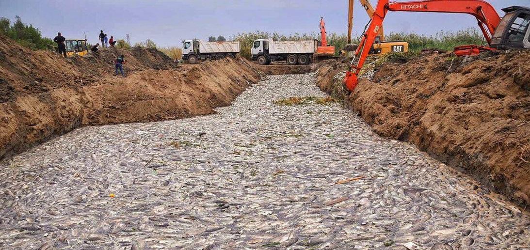 من يقف وراء تدمير الثروة السمكية في العراق؟