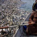 عفن السمكة وموتها بسموم إيران والسلطة الحاكمة في العراق يبدأ من رأسها