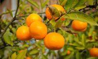 اللون البرتقالي يغزو الحدود الروسية وإقليم أبخاريا