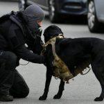 كلب الشرطة الهولندية يلفت الأنظار