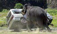 """فيل """"خارج السيطرة"""" في بلدة هندية"""