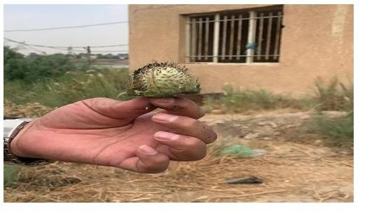 ضبط مزرعة للهيروين في محافظة واسط تعود لمليشيا العصائب