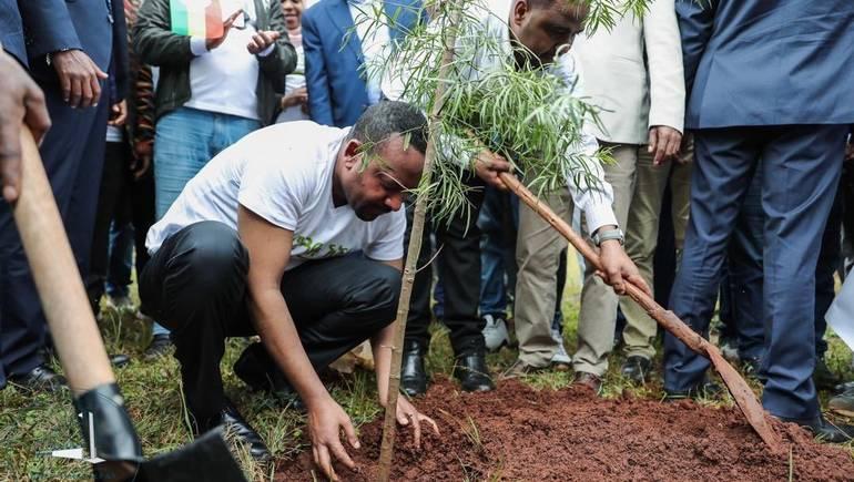 إثيوبيا.. زرع 200 مليون شجرة في يوم واحد