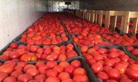 """تقرير أمريكي: العراق أبو الزراعة والخير يستورد """"طماطم إيرانية """"بـمليار و700 مليون دولار"""