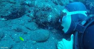 عنكبوت البحر.. أحدث موضة لتنظيف الأسنان للغواصين