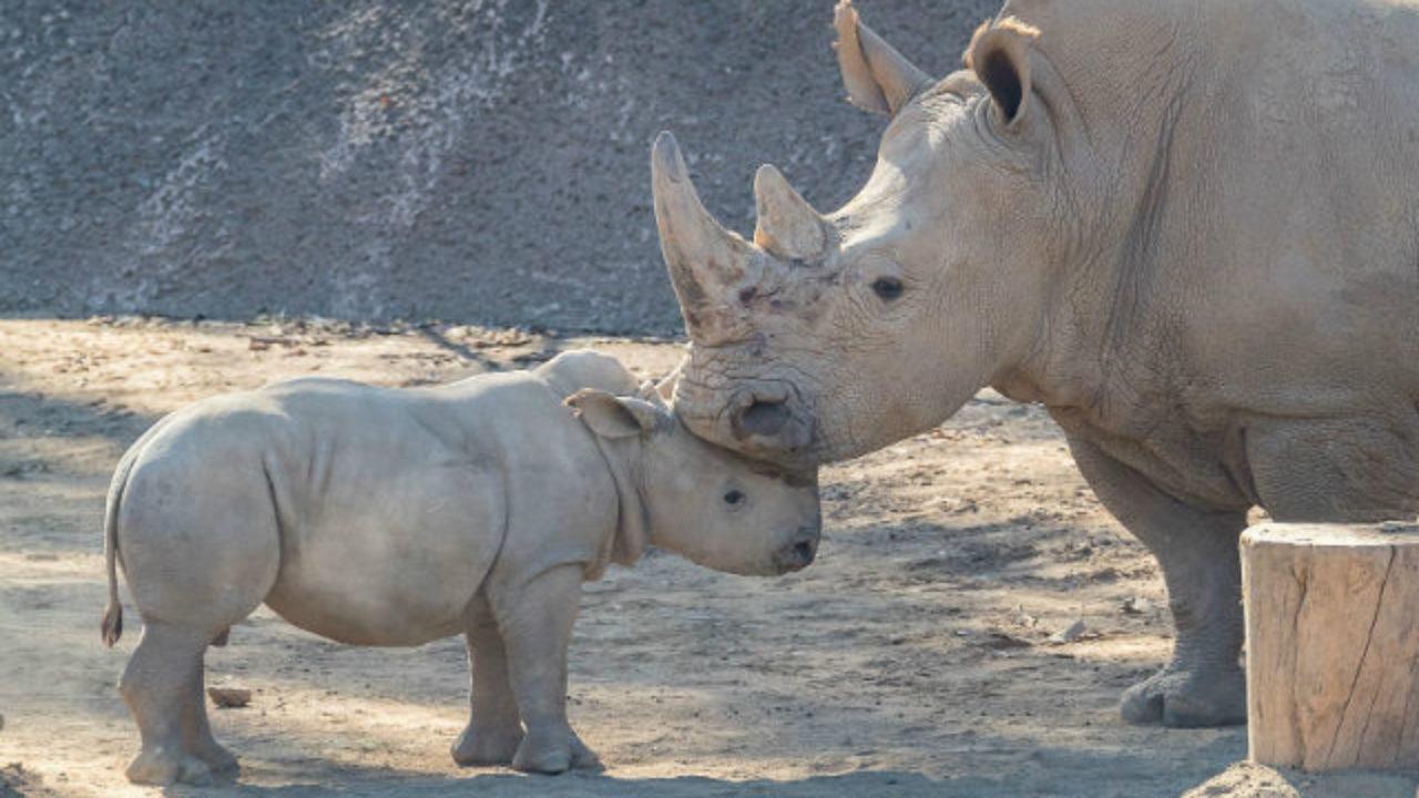 جائحة كورونا تعرض وحيد القرن للصيد الجائر في الهند