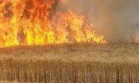 الزراعة النيابية:ميليشيات الحشد وراء حرق مزارع سلة الحبوب لصالح إيران