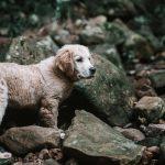 """ذهبوا من أجل إنقاذ حيوانات.. ليكتشفوا """"مأساة إنسانية"""""""