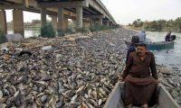 الزراعة النيابية تطالب الحكومة بحماية الثروة السمكية من التخريب الإيراني