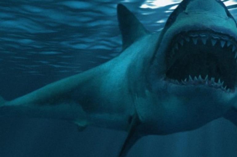 أستراليا ..هجمات أسماك القرش تحصد المزيد من البشر
