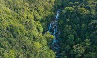 العثور على شخص فقد لمدة 18 يوماً في غابة استرالية