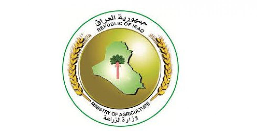 وزارة الزراعة:دخول الطماطم المهربة من كردستان تتحمل مسؤوليتها الداخلية وهيأة المنافذ