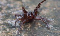 عناكب سامة تجتاح مدينة سيدني الأسترالية