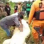 إخراج جثة طفل من بطن تمساح