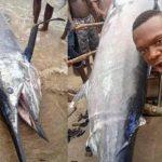 يصطاد سمكة قيمتها 2.6 مليون دولار.. ويلتهمها مع أصدقائه